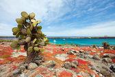 South plaza island — Stock Photo