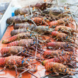 Lobster season - Stock Photo