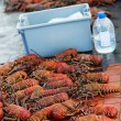 Lobster season — Stock Photo
