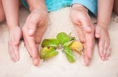 Hands protecting small plant — Stock Photo