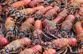Lobsters — Stockfoto