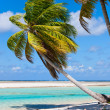 Stock Photo: Stunning tropical beach