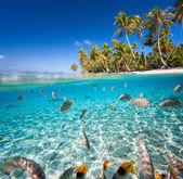Isola tropicale — Foto Stock