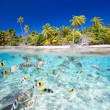 Tropical island — Stock Photo #26527573