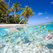 Tropical island — Stock Photo #26527785