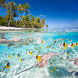 Tropical island under and above water — Stock Photo #26820661
