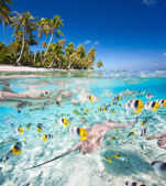 Tropical island under and above water — Stock Photo