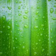 Fresh green leaves — Stock Photo #30697935
