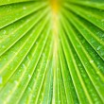 Fresh green leaves — Stock Photo