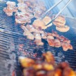 Stock Photo: Grilled meat