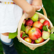 Organic apples in a basket — Stockfoto