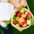 Organic apples in a basket — ストック写真