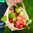Organic apples in a basket — Stock Photo #33212795