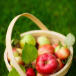 Organic apples in a basket — Photo