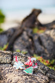 Christmas on Galapagos islands — Stock Photo