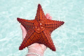 Estrela do mar vermelha — Fotografia Stock