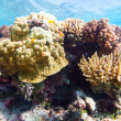 Coral reef — Stock Photo #34657953