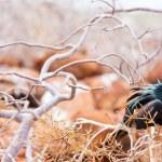 Male magnificent frigatebird — Stock Photo