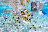 熱帯魚とシュノーケ リングの女性 — ストック写真