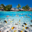 Stock Photo: Tropical island under and above water