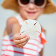 Stock Photo: Sand dollar
