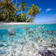 Tropical island — Stock Photo #39983965