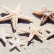 Starfish — Stock Photo #39984685