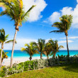 Beautiful Caribbean beach — Stock Photo #40437995