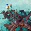 Stock Photo: Swimming with nurse sharks