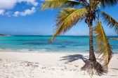 Beautiful Caribbean beach — Stock fotografie