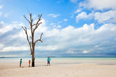 Lone tree at beach — Stock Photo
