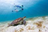 Family snorkeling with sea turtle — Stock Photo