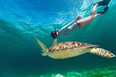 Young woman snorkeling with sea turtle — Stock Photo