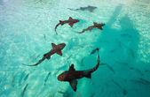 Nurse sharks — Stock Photo