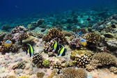 Coral reef underwater — Stock Photo