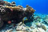 Coral reef underwater — Stock Photo