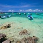 Tropical coast in Mexico — Stock Photo #9693723