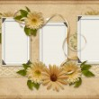 Vintage background with photo-frames and gerbera — Stock Photo