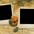Grunge gorgeous background with a polaroid-frames and a rose — Stock Photo