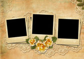 Grunge gorgeous background with a polaroid-frames and a rose — 图库照片