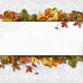 Autumn banner with leaves — Stok fotoğraf