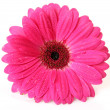 Stock Photo: Pink flower