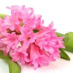 Fine flower — Stock Photo #1328360