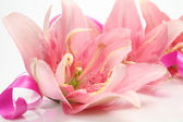 Pink lilies and streamer — Stock Photo
