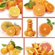 Stock Photo: Ripe oranges and tangerines