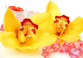 黄色の蘭の花やキャンドル — ストック写真