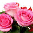 Pink roses — Stock Photo #15318853