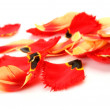 Petals of tulips — Stock Photo #17345479