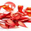 Petals and streamer — Stock Photo
