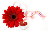 Flower and candle — Stock Photo